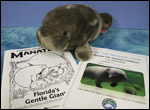 Manatee Plush Toy and Adoption Gift Certificate