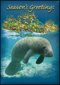 Manatee Holiday Card