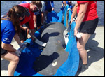 Faye the manatee is released