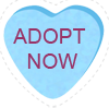 Adopt Now Heart
