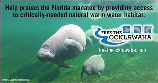 Provide Access to Critically-Needed Habitat for Manatees