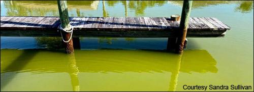 Algae bloom in the Indian River Lagoon