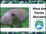 Virtual manatee presentation screenshot